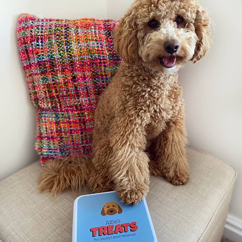 Alfie with his Personalised Treat Tin