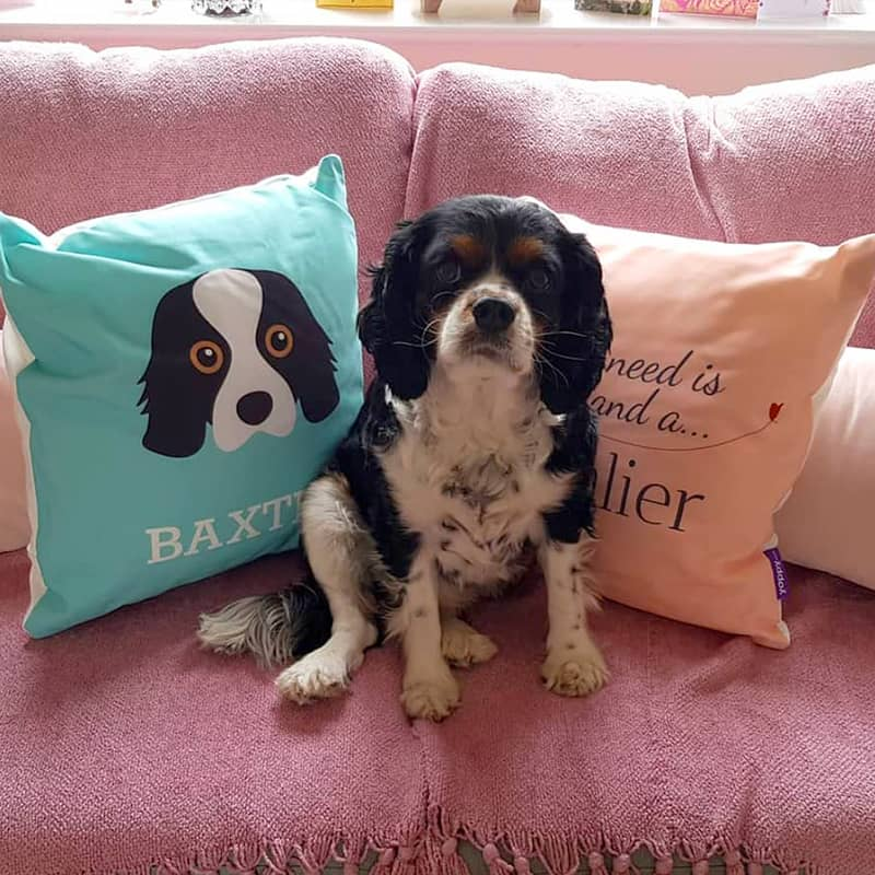 Baxter with his Personalised Cushions