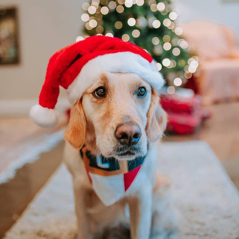 Lulu wearing her Personalised Christmas Bandana