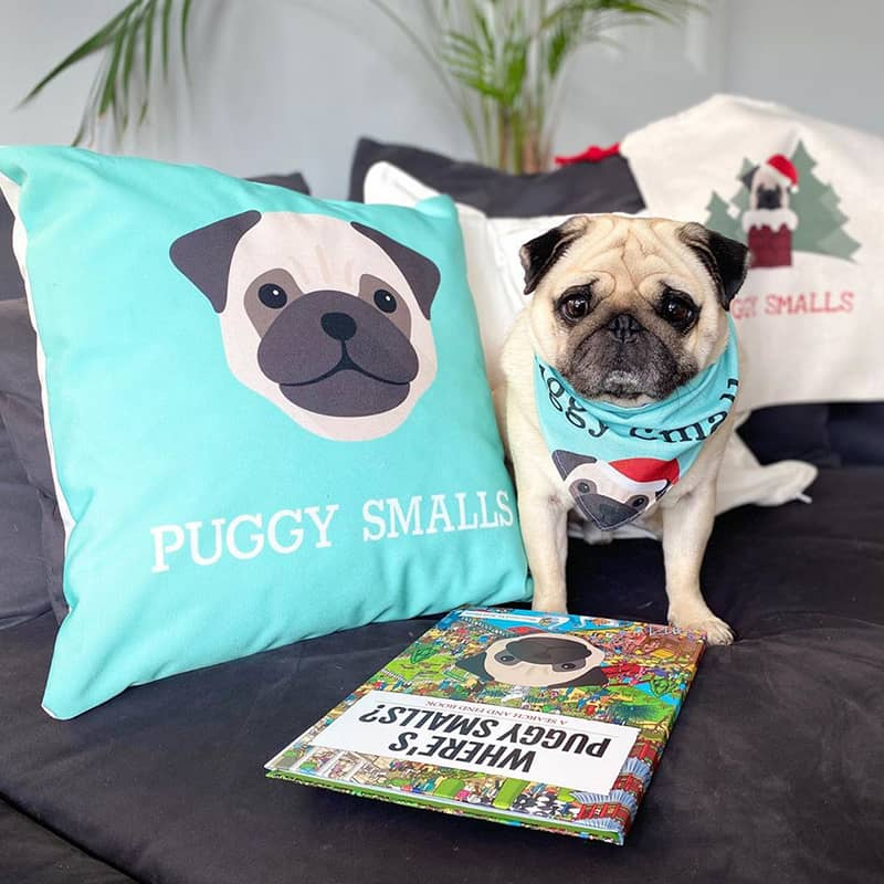 Puggy Smalls with his Christmas Bandana and Sack, Where's Book and Icon Cushion