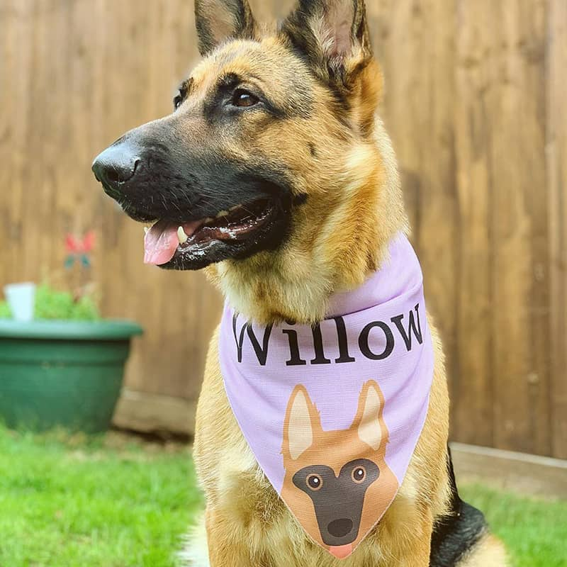 Willow With her Personalized Bandana
