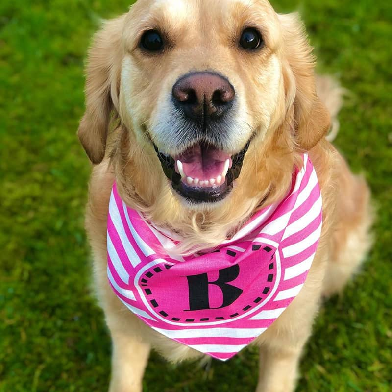 Bonnie with her Personalized Bandana