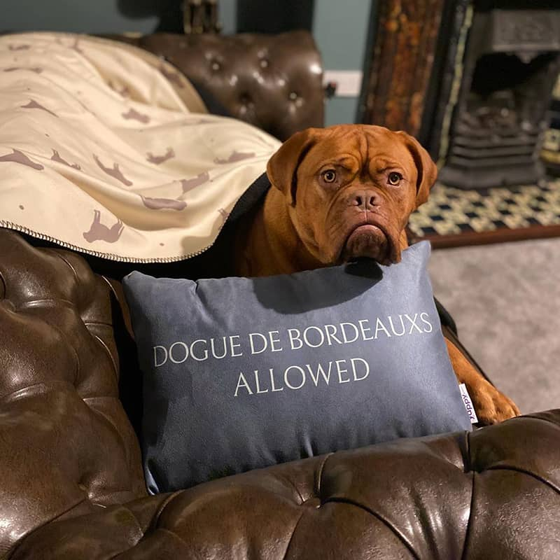 A Bordeauxs with his Personalized Cushion