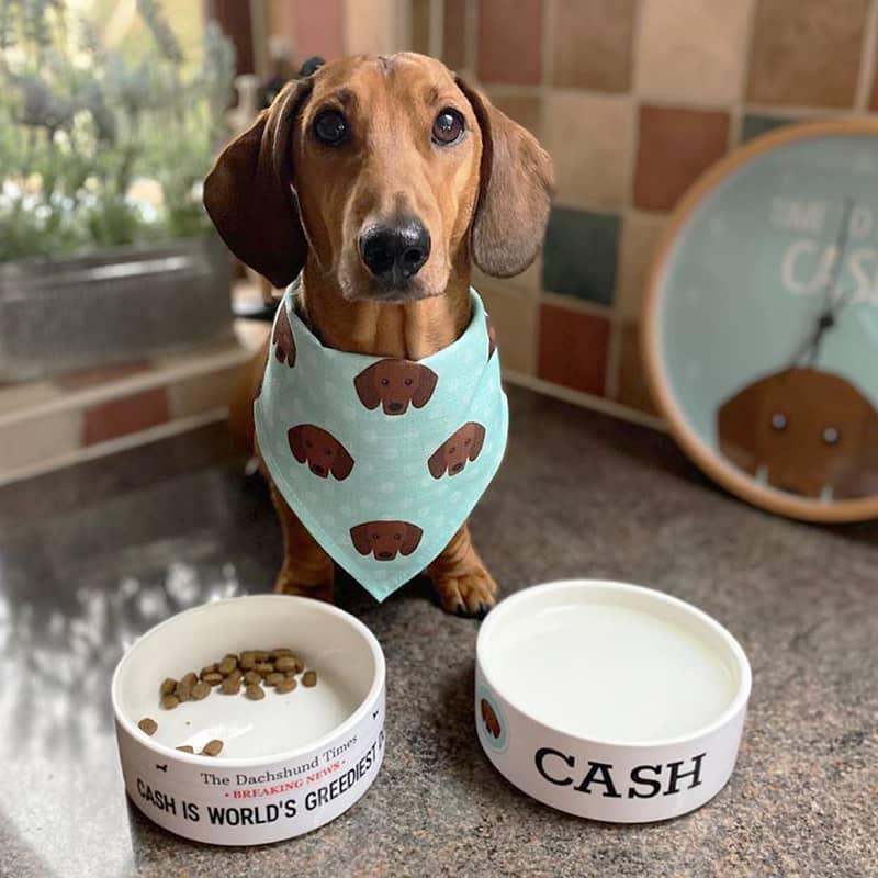 Cash with his Bandana, Bowls and Clock