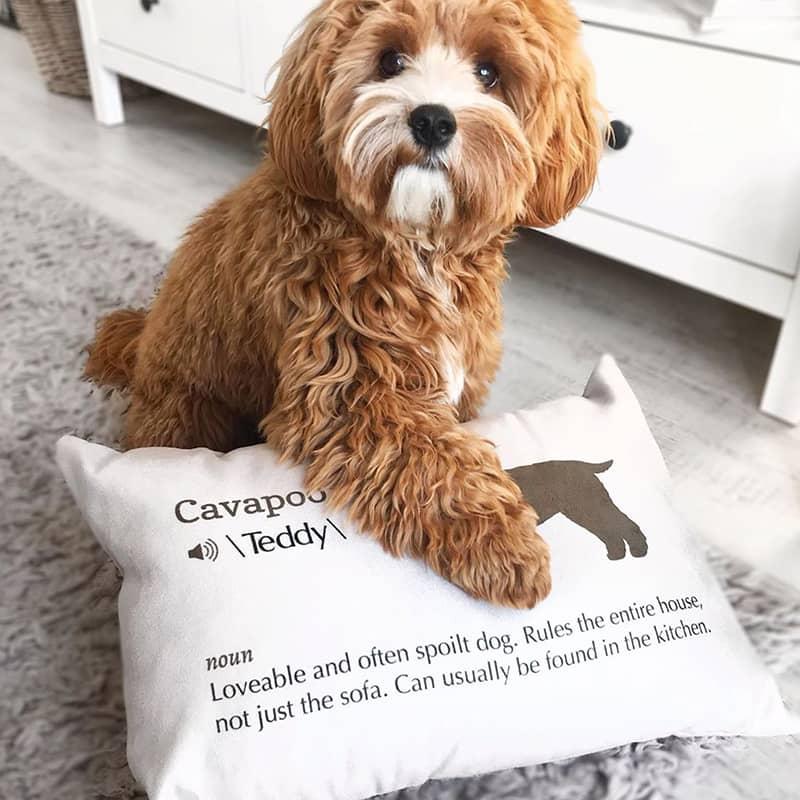 Teddy with his Dog Definition Cushion
