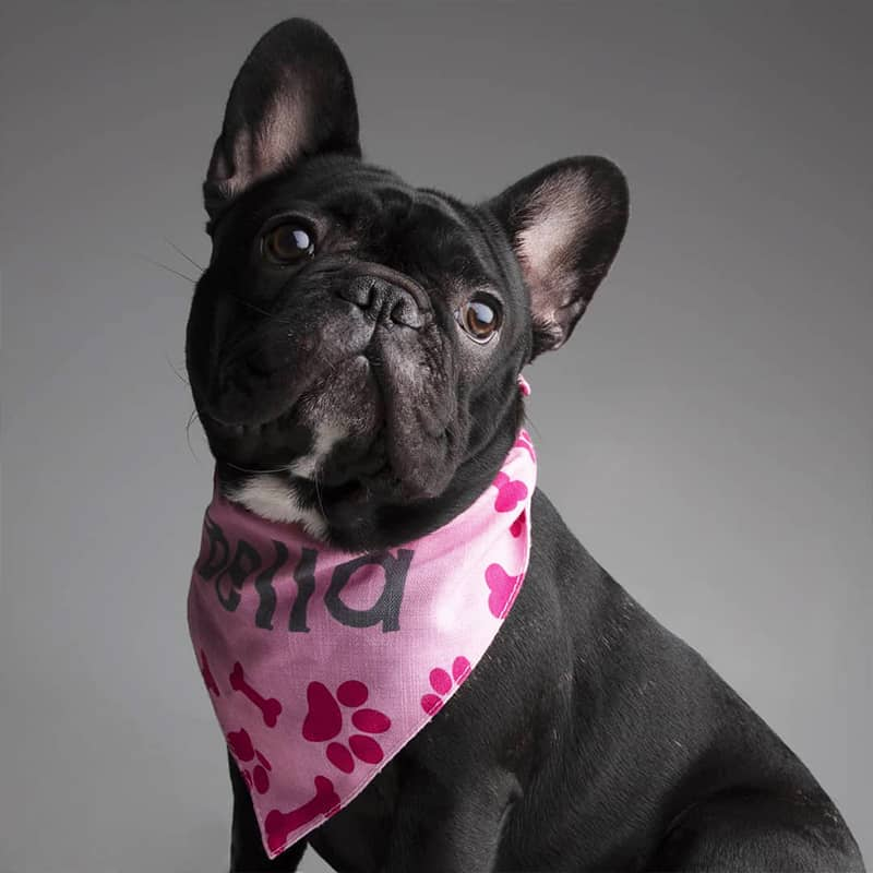 Bella wearing her Personalized Bandana