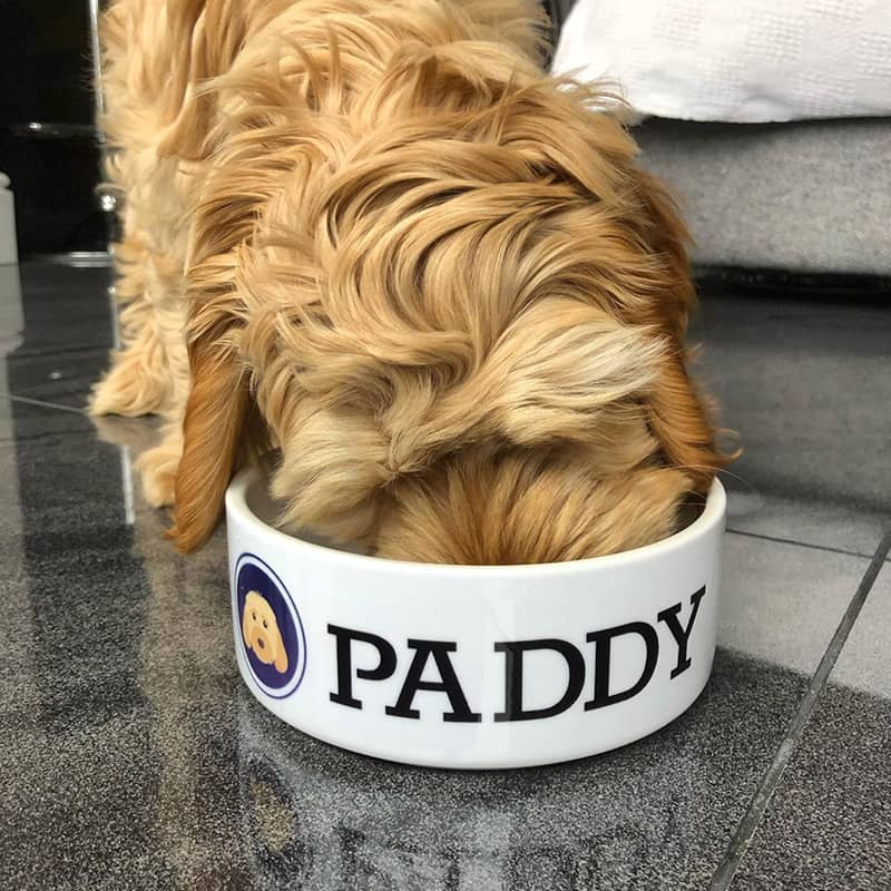 Paddy with his Personalized Dog Bowl