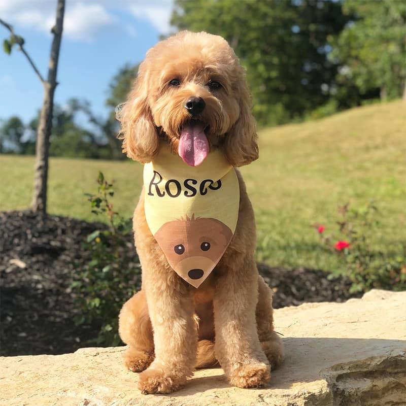 Rosco wearing his Personalized Icon Bandana