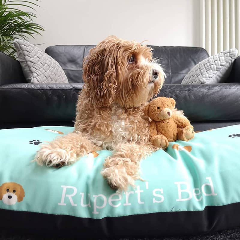 Rupert with his Personalised Bed