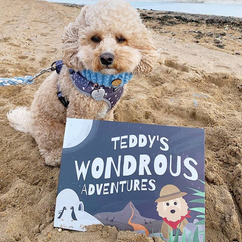 Teddy with his Wondrous Adventures Book