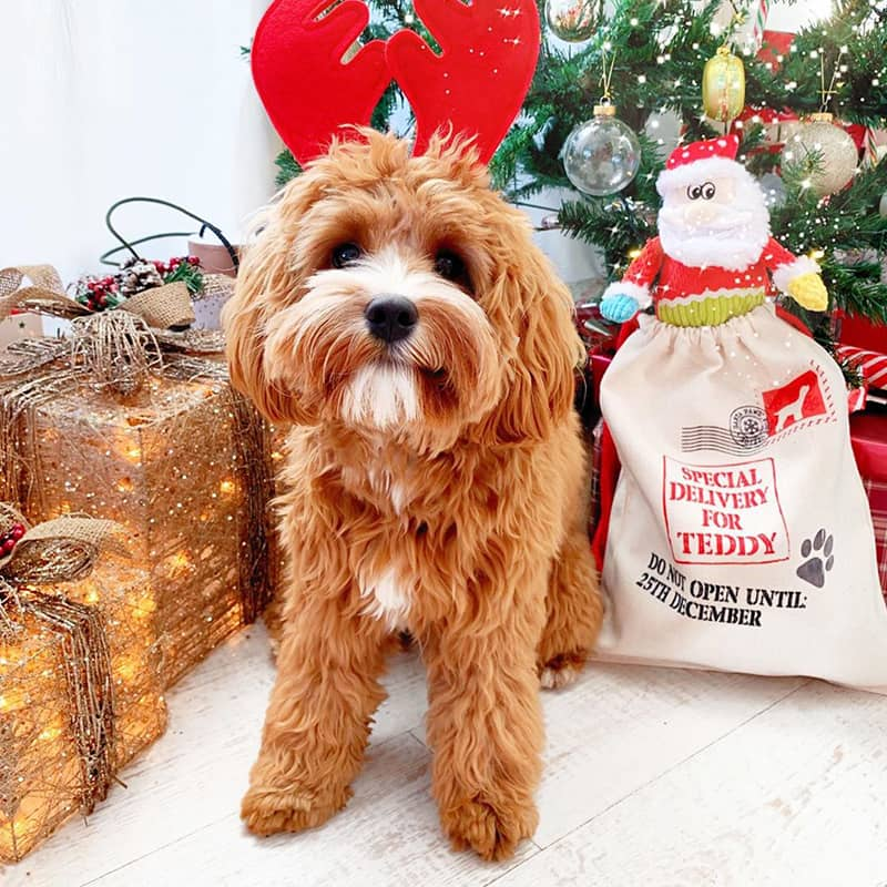 Teddy with his Personalised Christmas Sack