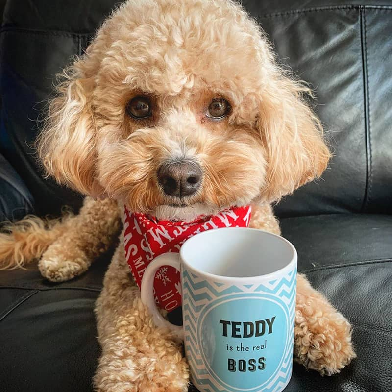 Teddy with his Personalized Boss Mug